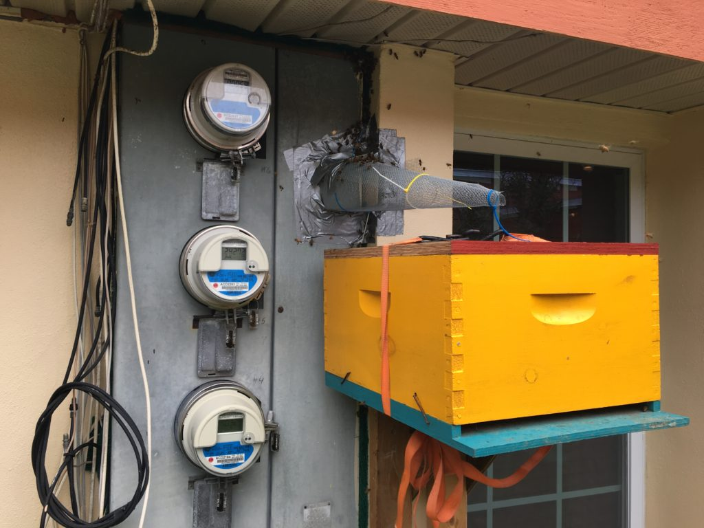 Lee Honey Bee Hive Removal Trap Out Electrical Panel