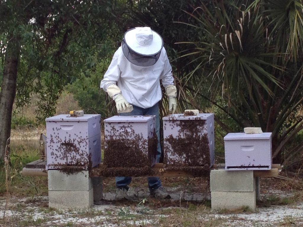 Tim and his Bee Hives at the Bee Farm
