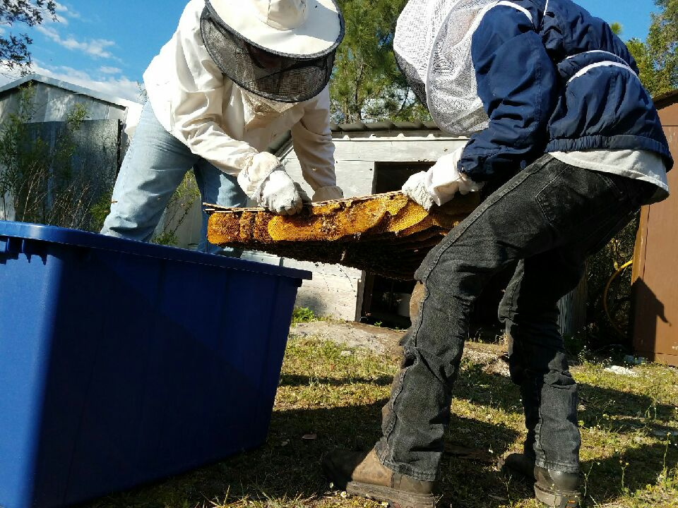 Q  How Much Bee Hive Removal Experience Do You Have? | Bee Removal