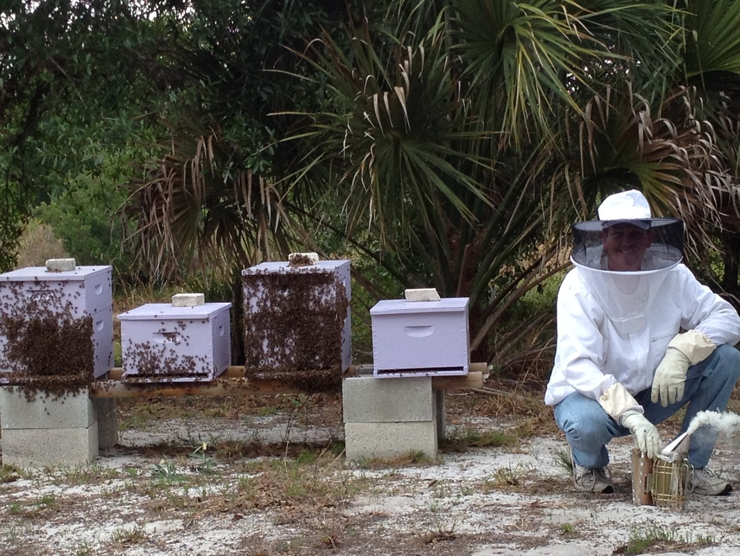 Tim at the apiary