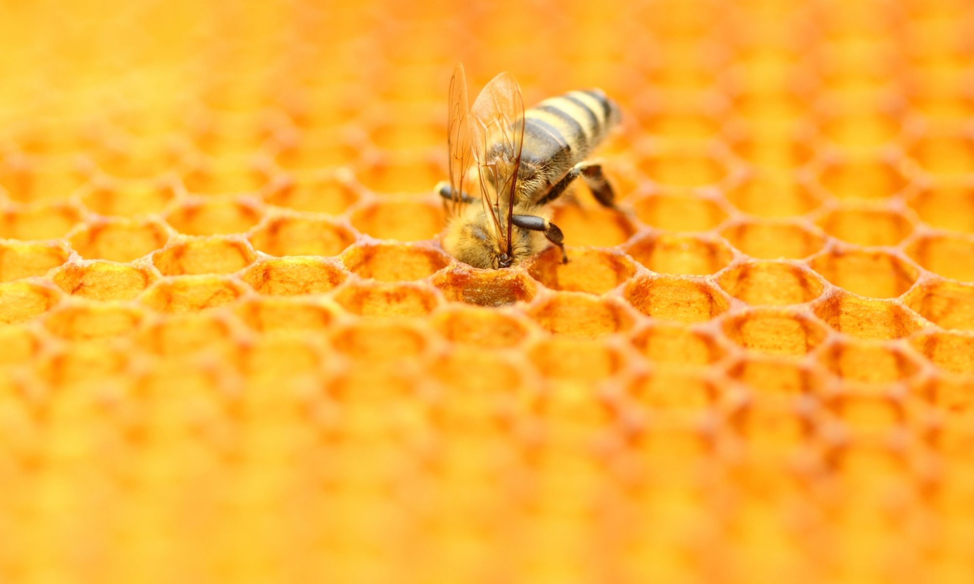 Bee Removal Cape Coral | Punta Gorda