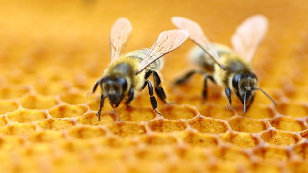 Honey Bee Removal Cape Coral | Punta Gorda