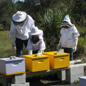 beekeeping Cape Coral