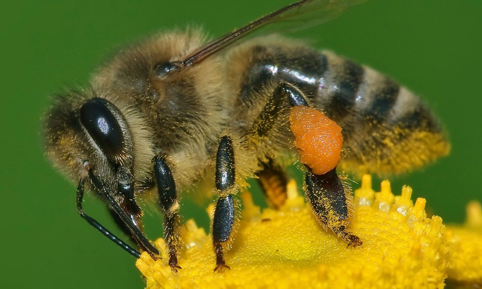 Bee Removal 239-634-1671