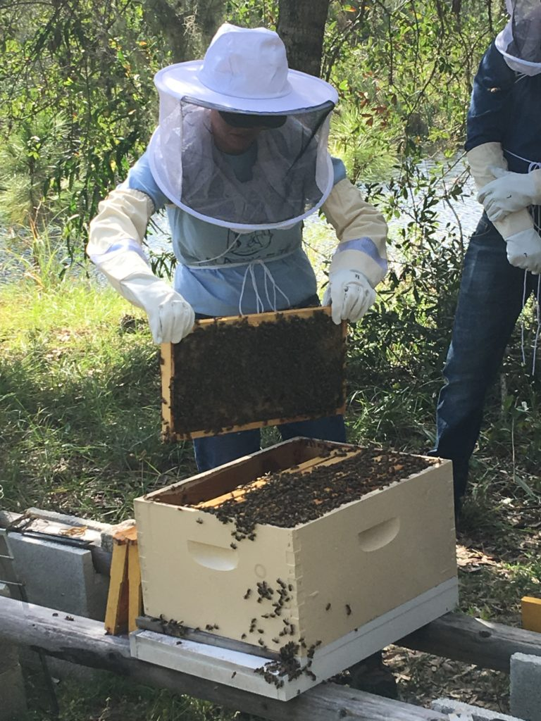 Students working the hive with live bees during Hive inspections at Bee 101 Hands on Workshop | Lee Honey Bee
