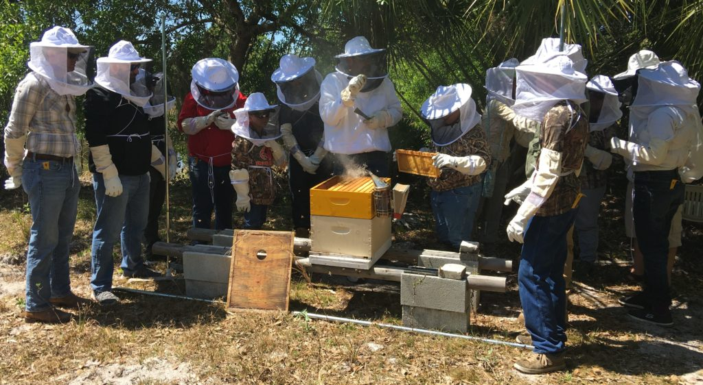 Beekeeping 101 Cape Coral